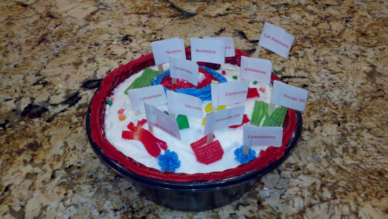 The grand adventures of a tween animal cell model project cake animal cell made out of cake and candy non dairy ccuart Choice Image