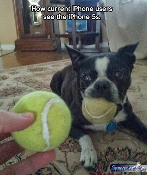 funny dogs iPhone humor