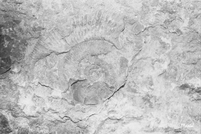 fosil-playa-Meliana