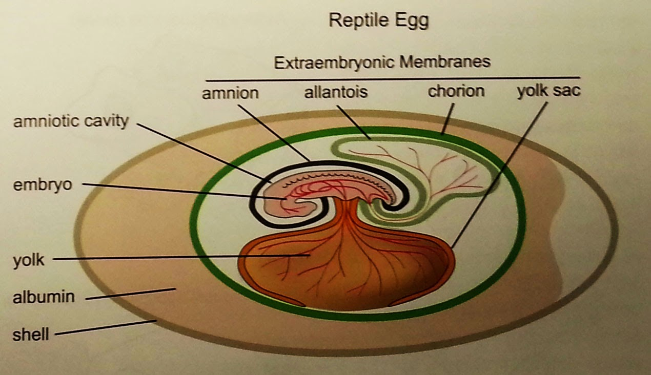 Anatomy of a egg 7159334 - follow4more.info