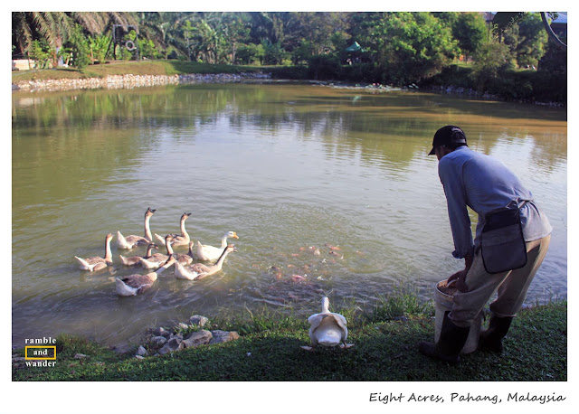 Eight Acres Resort, Raub, Pahang, Malaysia | www.rambleandwander.com