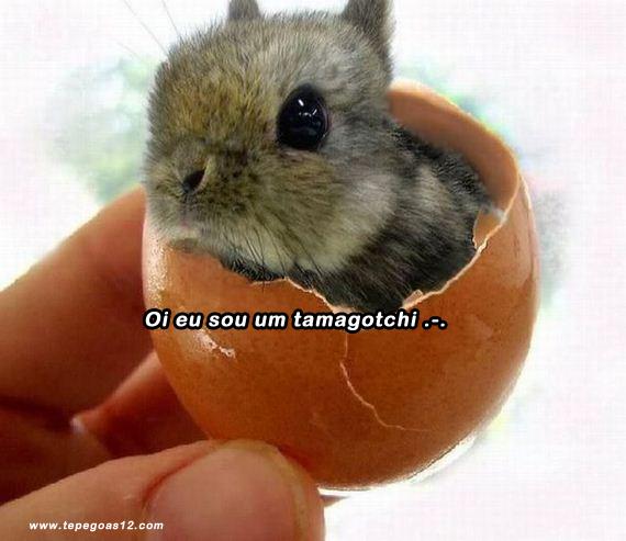 Sou um tamagotchi tamagochi