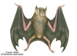 murcielago vampiro sus habitos registro fosil alimento Desmodus rotundus