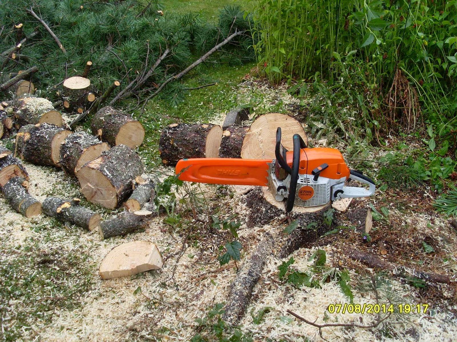 Järeämmätkin pihapuut kaatuvat Stihlillä. Puunkaatotiedustelut e-mail: talonmiespalvelu@gmail.com