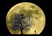 Luna, lunera...