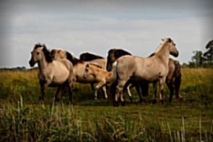 Diseases of Horse