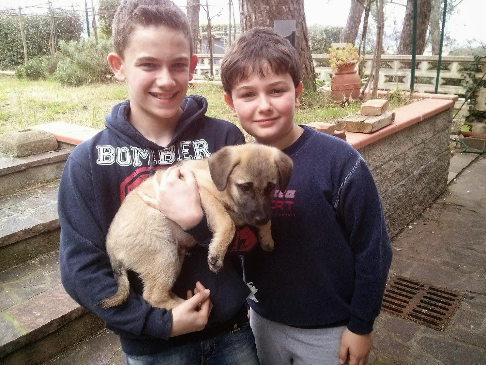 adozioni cani cuccioli