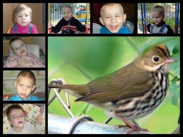 Sparrow & Kids