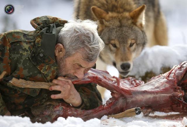 Исследователь Вернер Фройнд грызёт мясо оленя вместе со стаей в Парке волков Вернера Фройнда в Мерциге, Германия. (Lisi Niesner/REUTERS)
