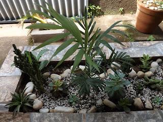 floresta de plantas suculentas