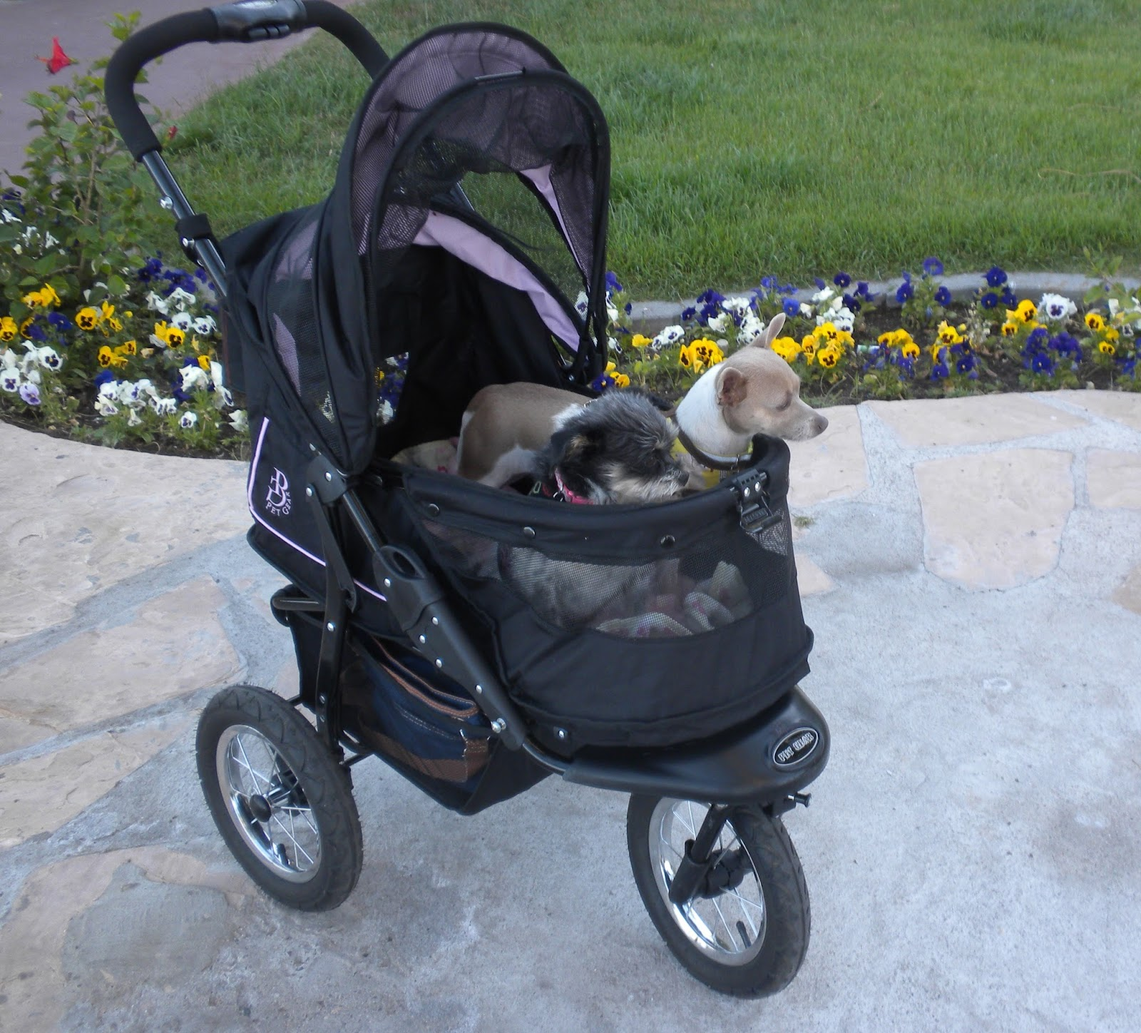 Dog Strollers For Small Dogs Petsmart