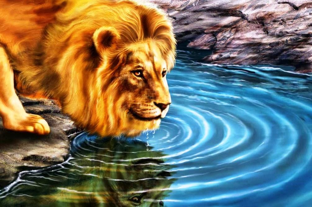 Lion on a pond of Water Desktop Wallpaper