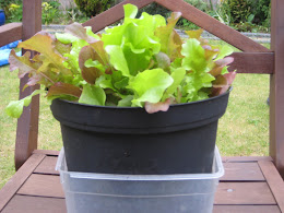 Grow your own salad leaves