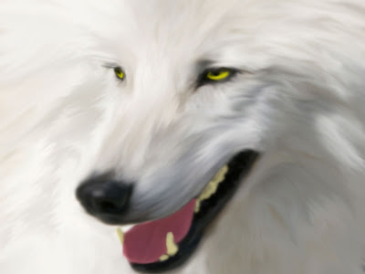 White Wolf Latest Wallpapers