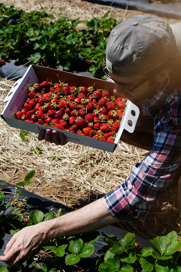 strawberry picking in new jersey