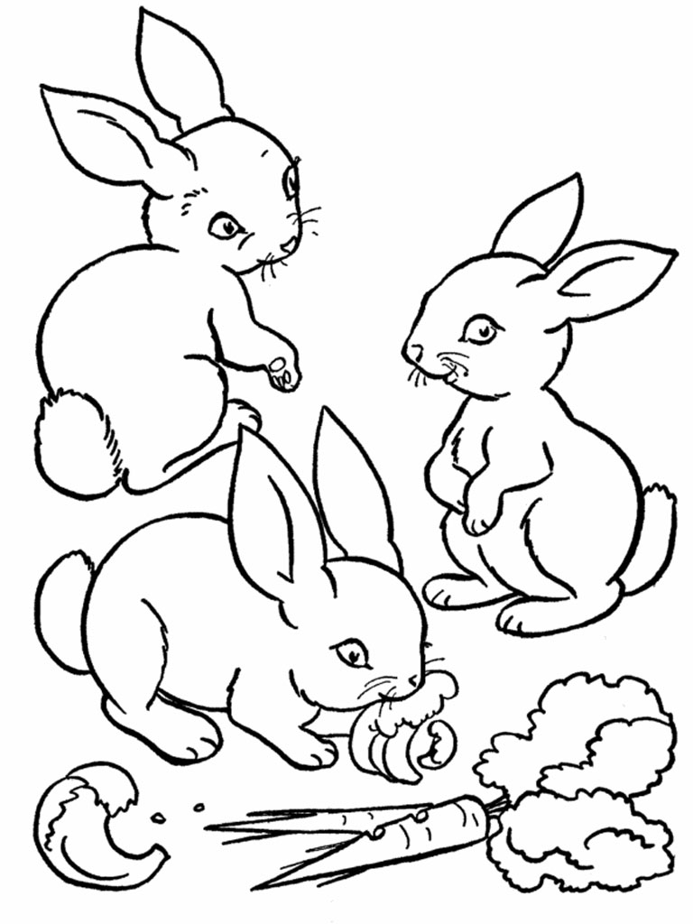 realistic baby bunny coloring pages - photo#28