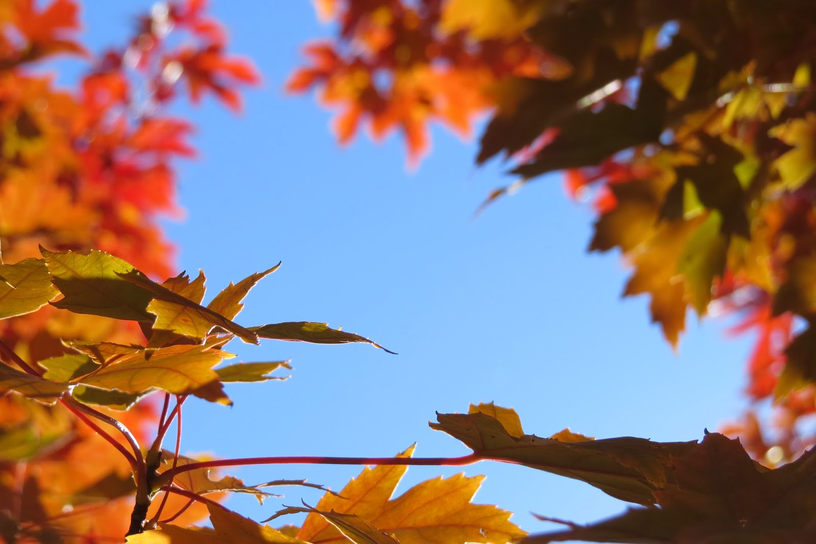 Finding beauty in every day, fall leaves in Boise
