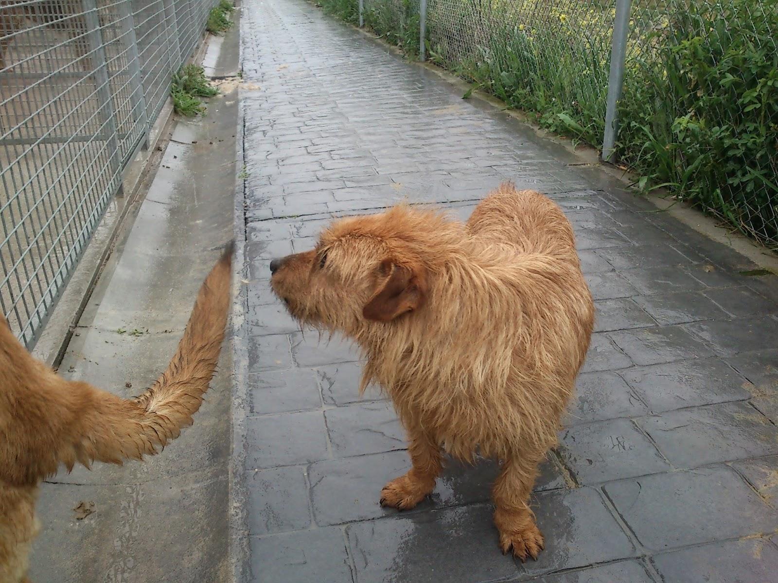 Centro de protecci n animal arroyomolinos diciembre 2013 - Chino arroyomolinos ...