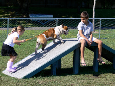 Kids Bulldog, training dogs, dog parks