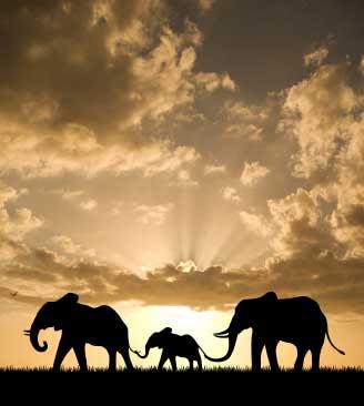 http://2.bp.blogspot.com/-DBU2E-7poz8/TrkRB39LYDI/AAAAAAAAAqk/qpyp21e6OYc/s400/Adaptation-Of-The-Elephant.jpg