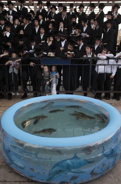SEJUMLAH penduduk ortodoks Yahudi berdoa di depan  kolam plastik yang mengandungi beberapa ekor ikan di Bnei Brak, dekat Tel Aviv kelmarin.