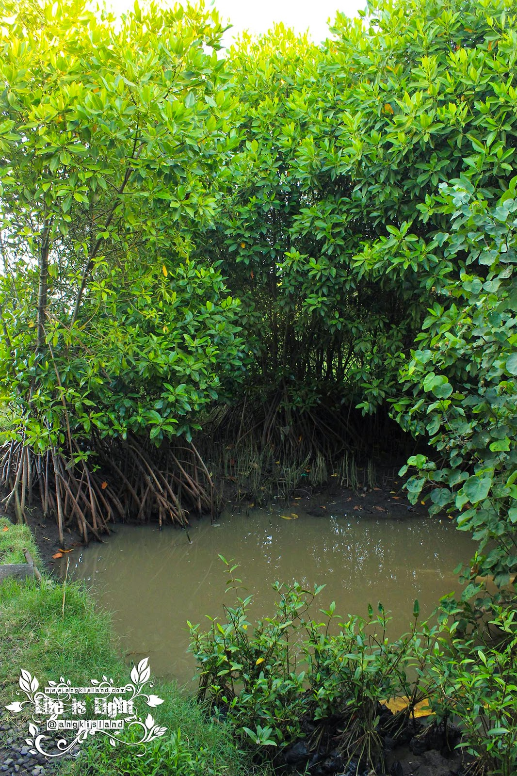 hutan bakau baros bantul
