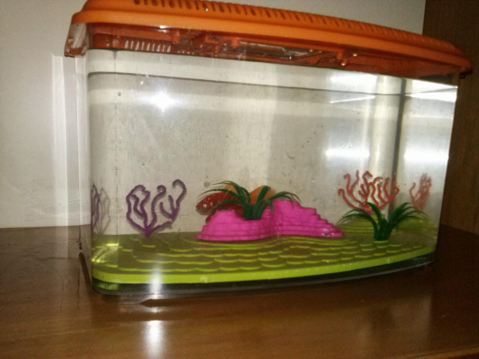 barabao: come allestire un acquario per pesci rossi - Allestimento Acquario Dolce Con Piante Vere