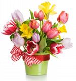 Spring flowers, fiori di primavera. Esercitazioni on line e schede ...
