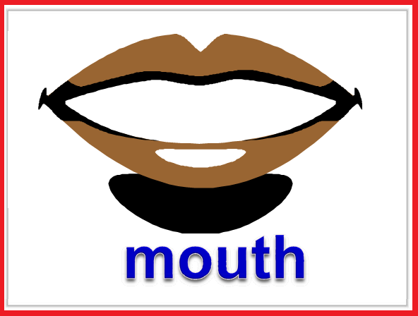 Kindergarten Worksheets: Parts of body Flashcards - Mouth