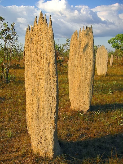 Large termite nests in Litchfield National Park, Australia