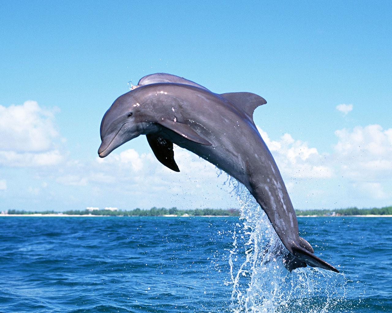http://2.bp.blogspot.com/-DCARkjV1ktk/T8OaHdRoseI/AAAAAAAACu8/M4PnezLelps/s1600/Dolphin-Jumping.jpg