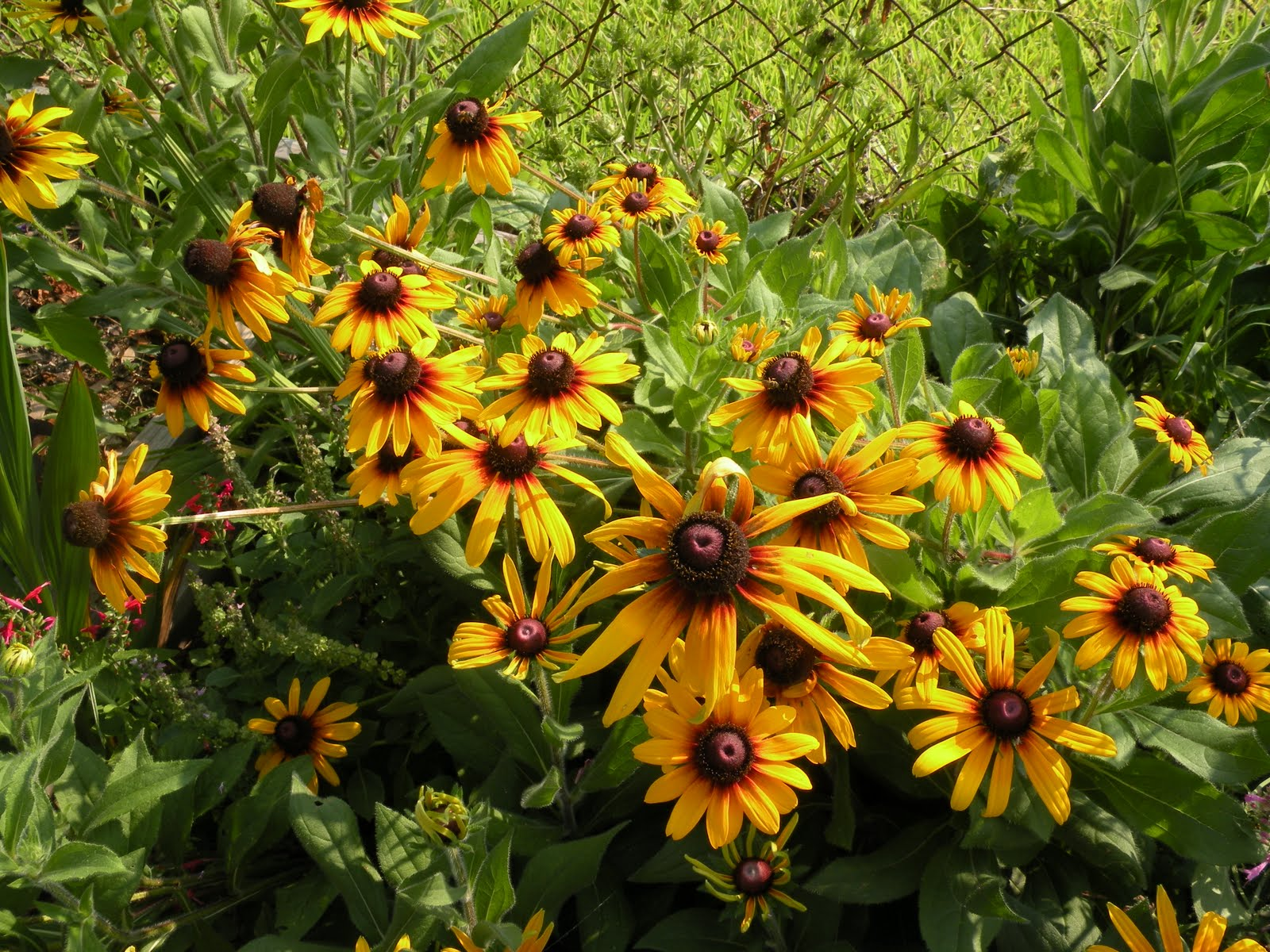 Black eyed susans blog archives Black eyed susans