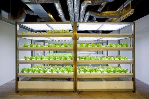 10-Urban-Farm-Building-Architects-Kono-Designs-Pasona-Group-www-designstack-co