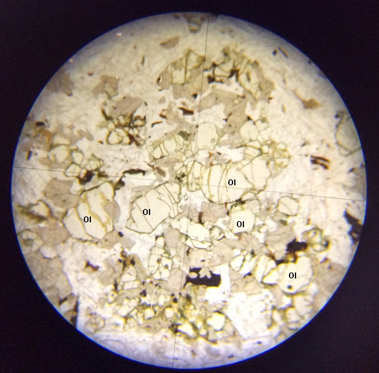 Olivine thin section ppl