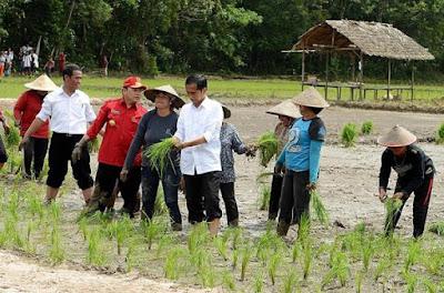 Jokowi turun ke sawah