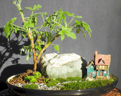 Miniature Garden with Rober's Lemon Rose Scented Pelargonium