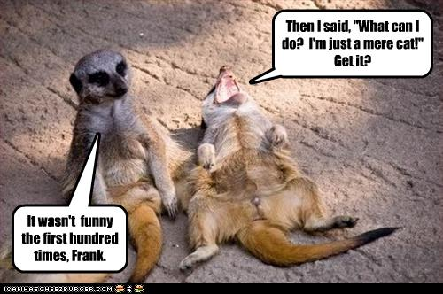 funny-pictures-meerkats-tell-jokes.jpg