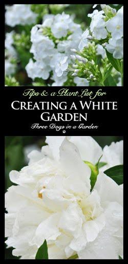 Creating a White Garden