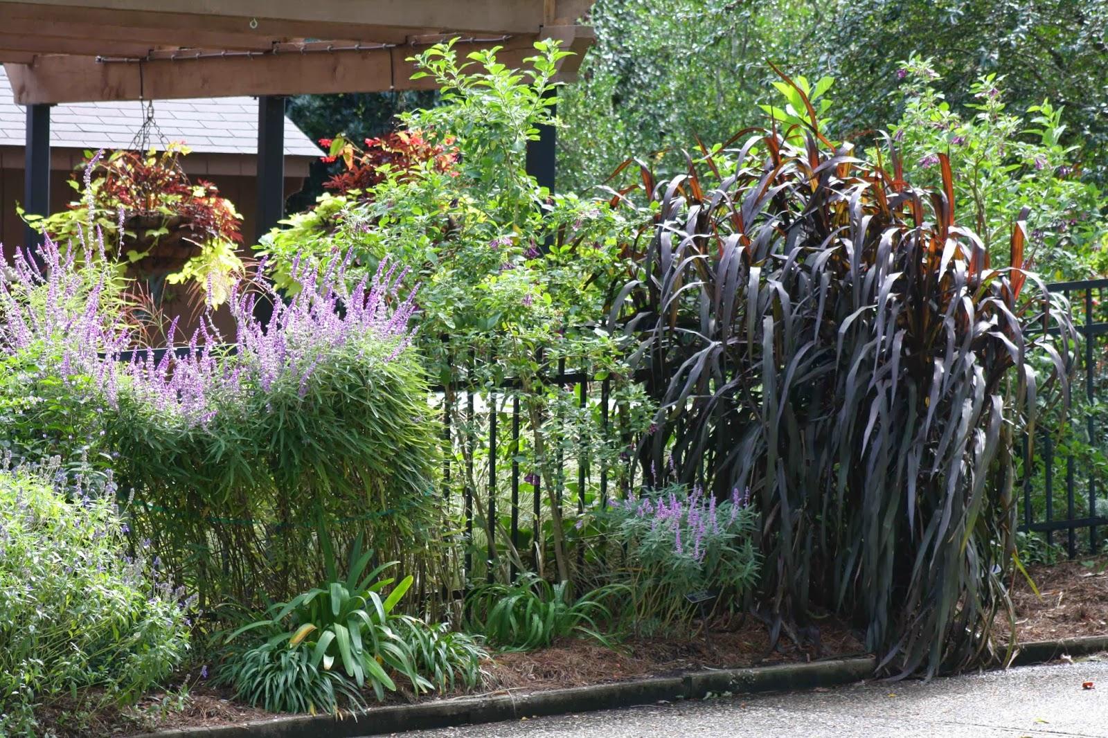 Tall Decorative Grass Roses And Other Gardening Joys Garden Inspiration