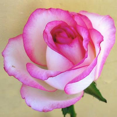 Regalame una flor.  Entrada+flores+15