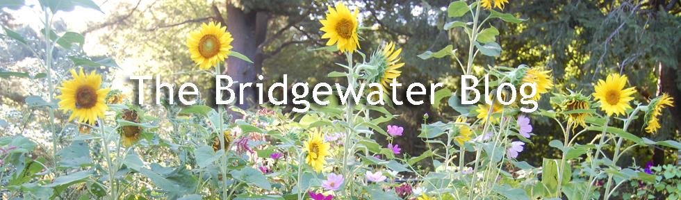The Bridgewater Blog
