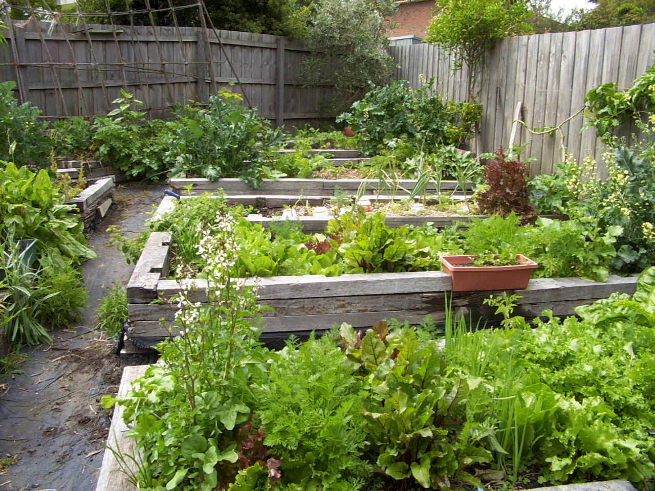 Small farm sustainable living vegie patch examples for Creating a small garden