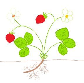 Maasikaprojekt