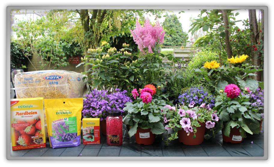 Garden gardening summer flowers lavender fertilizer eco ecostyle strawberries sunflowers dhalias dahlias back yard shopping haul memebox scent bees
