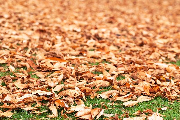 otoño, automne, travel, emociones, gataflamenca, inspiration