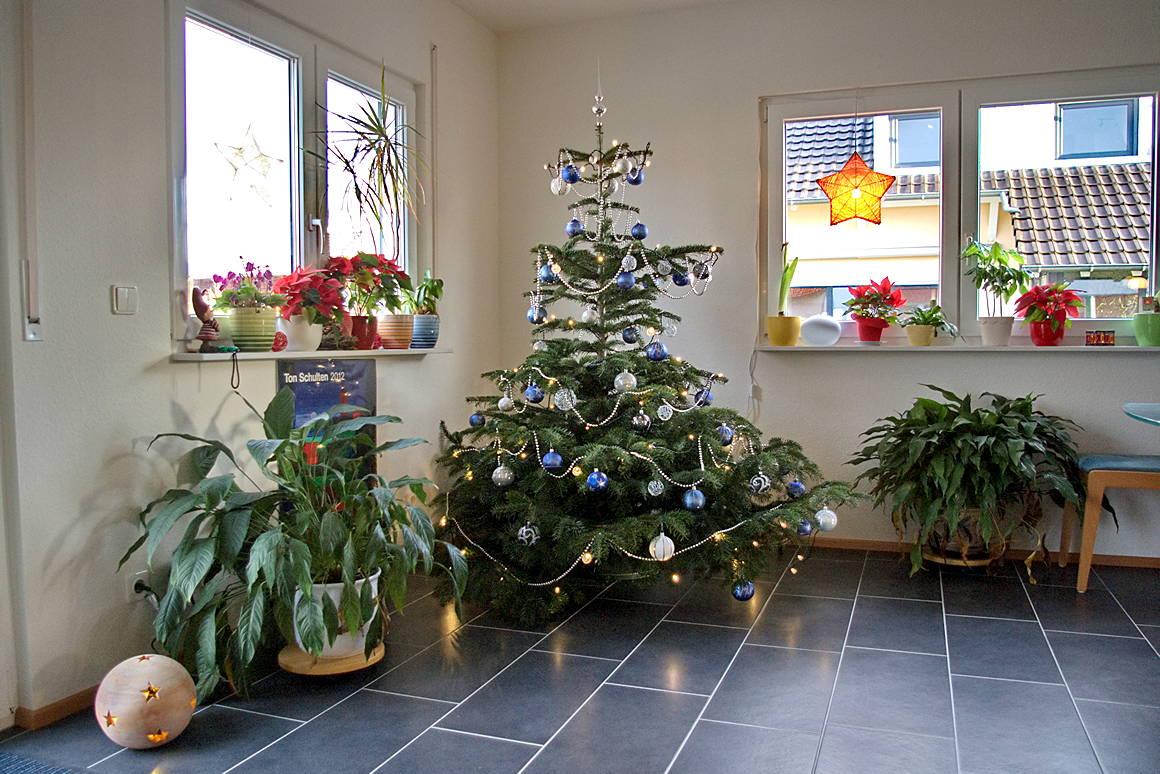 Das Schauerhaus: Den ersten Baum im eigenen Haus...