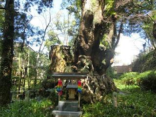 熱海:来宮神社大楠