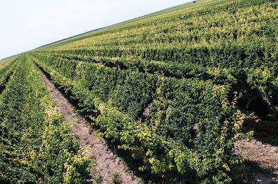 Kingsburg Orchard