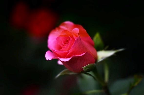 É tempo de praticar o amor e o perdão