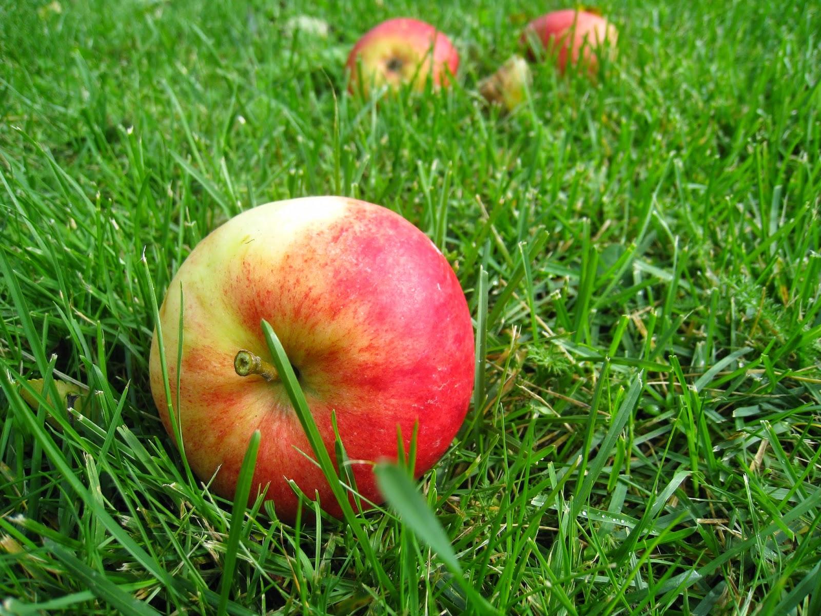 Potřebujeme ovocnáře, znalce odrůd a roubování